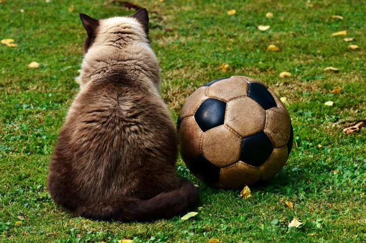 cat-2486447_1920