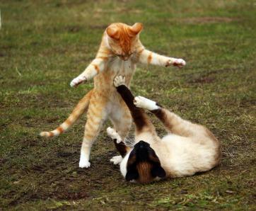 cat-1234950_1920