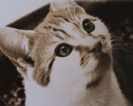 A cat's face looking up. The photo has been chemically sepia-toned. The cat's fur has been hand-tinted ginger, his eyes green.