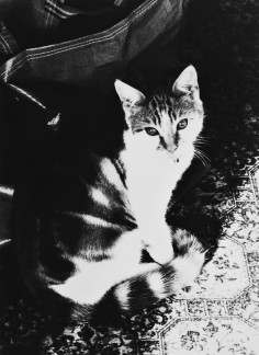 Black and white photo of a tabby cat sat in a bright ray of sunshine on a patterned carpet. Cat is looking directly at the camera with a very sweet expression.