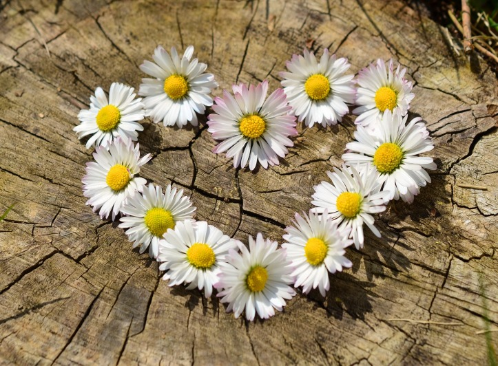 White daisies, set in the shape of a heart, on top of a tree stump.