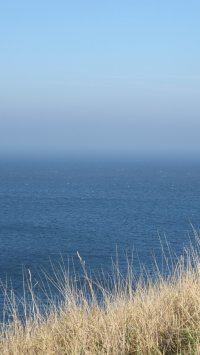 A view of sky, mist and sea all merging together into a beautiful blue scene. In the foreground are some straw-coloured grasses.