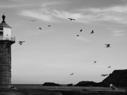 Black and white view out to sea framed on the left by a lighthouse. There are some cliffs and rocks to the centre and right. Several birds are silhouetted in flight.