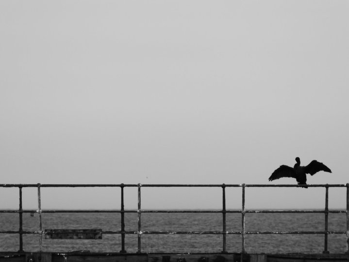 Black and white photo of a cormorant perched on railings looking out to sea. The bird has its wings outstretched.