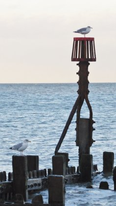 A view to sea with a gull perched on top of a red groyne marker pole, with another gull perched on the wooden groyne in the foreground.