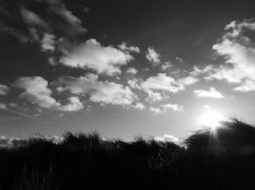Black and white photo of a silhouetted grassy foreground against a cloudy and contrasting sky. The sun is glaring from just above the grass-line to the right.