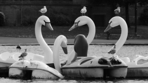 Black and white photo of tatty white swan pedalos on a lake. The three main pedalos have a gull each sat on their heads.