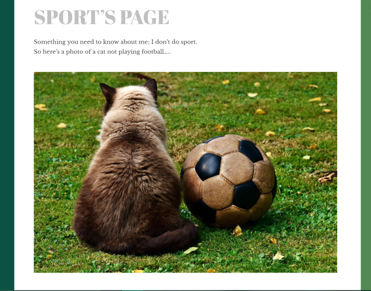 Underneath the heading and words is a photo of the back of a scruffy fat brown cat. It's sat next to a dirty leather football.